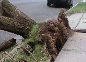 Tree Falls on Broad Street in Downtown Newark   rlsmedia com